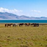 Incredible Kyrgyzstan - Gallery 7