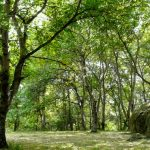Arslanbob Walnut Forest - Галерея 1