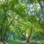 Arslanbob Walnut Forest - Галерея 0