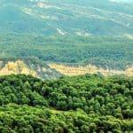 Forêt de noyers d'Arslanbob