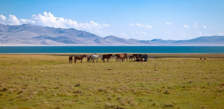 Jour 14. Kotchkor – Son Kol (ca. 150 km, 3h)