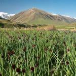 La valle Suusamir - Галерея 0
